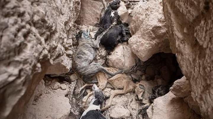Una fosa común repleta de cadáveres de perros aparece en Tarancón (Cuenca)