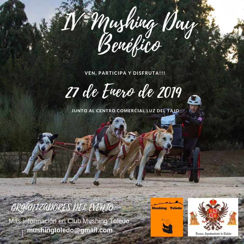 IV Mushing Day Benéfico de Toledo