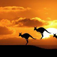 Australia con perro