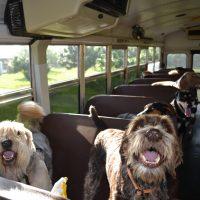 Viajar en autobus con perro 3