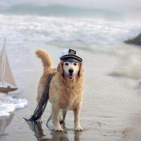 Viajar en barco con perro