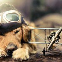 Volar con perro