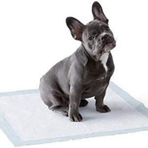 Amazon Basics - Toallitas de entrenamiento para mascotas (tamaño regular,