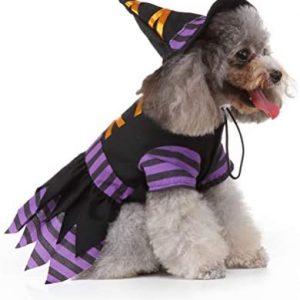 POPETPOP Disfraz de Bruja para Perros: Disfraces de Halloween para